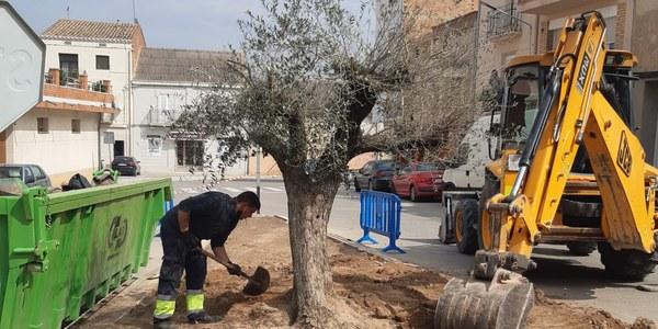 Renovació de l'arbre del carrer Bassa Bovera